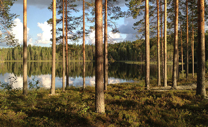 Metsänhoitotyöt